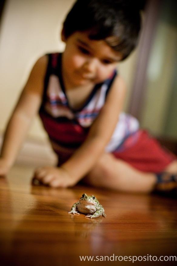 Leonardo salva la rana