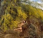 Lindy-Messa-Desert-Flowers-Sam-Haskins