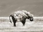 amazing-animal-pictures-13