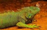 amazing-animal-pictures-15