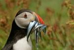 amazing-animal-pictures-19