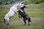 amazing-animal-pictures-44