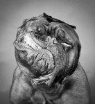 amazing-animal-pictures-46