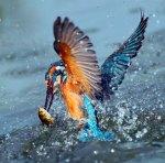 amazing-animal-pictures-47