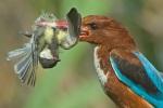 amazing-animal-pictures-5