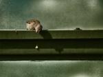 amazing-animal-pictures-8