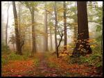 Autumn_forest_2_by_mjagiellicz