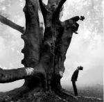 rodneysmith1 big tree