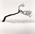 michael kenna TREE