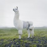 Animals-portraits-by-Simen-Johan-10
