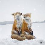 Animals-portraits-by-Simen-Johan-12