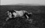 Bruce_Davidson_The_Welch_Pony_118_129