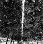"""The Nature of Paris,"" Davidson1"