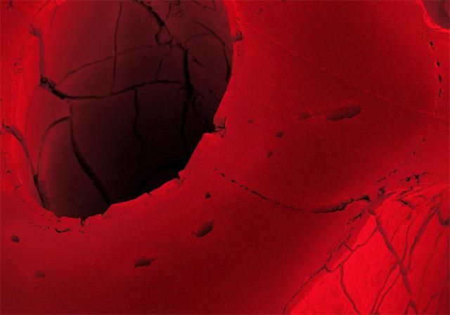 Red Licorice 20x