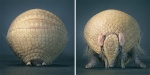 more-than-human-animal-photography-tim-flach-9