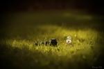 greenfield-pani_pa
