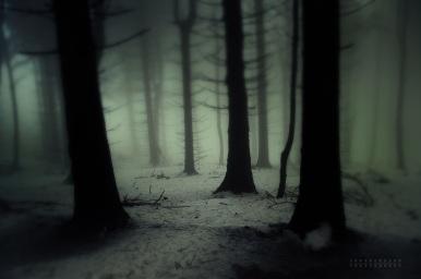 _dark_forest__by_janek_sedlar-d5pwom2