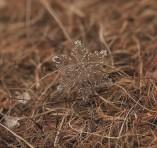 snowflakes-macro-photography-andrew-osokin-2-600x566