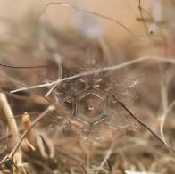 snowflakes-macro-photography-andrew-osokin-20-600x598