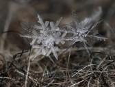 snowflakes-macro-photography-andrew-osokin-23-600x454