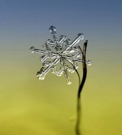 snowflakes-macro-photography-andrew-osokin-28-600x667