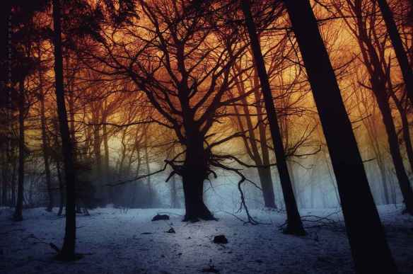_tree_of_imagination__by_janek_sedlar-d5pkm5b