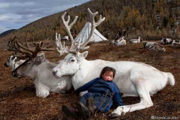 reindeer-farm-mongolia-1330758004-245
