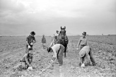 Arthur+Rothstein+-+Potato+pickers%252C+Rio+Grande+County%252C+Colorado%252C+1939