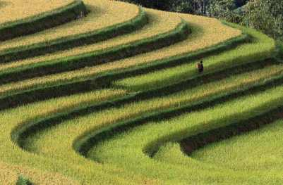 Smithsonian-photo-contest-travel-rice-terrace-vietnam-voanh-kiet