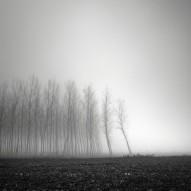 tree-landscapes-by-pierre-pellegrini-3-600x600