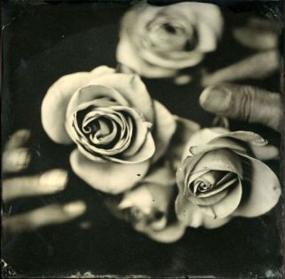 roses070