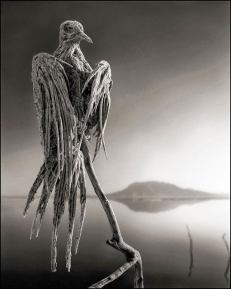 deadly-lake-in-tanzania-calcifies-animals-02Nick+Brandt