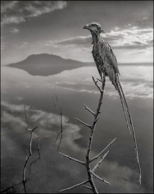 nick-brandt-calcified-bird-lake-natron
