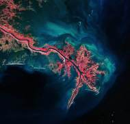 Mississippi_River_Delta_large