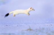 wildlifephotographer021