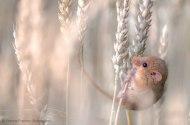 wildlifephotographer20