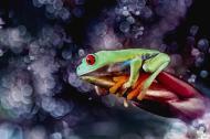 macro-frog-photography-17