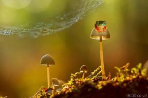 macro-frog-photography-3