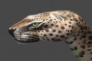 Leopard1-510x340